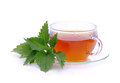Tea nettle fresh herbal from Royalty Free Stock Photos