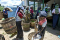 Tea pickers bring in their mornings work to be weighed at a plantation station near Nuwara Eliya in Sri Lanka. Royalty Free Stock Photo