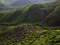 Tea plantation in the cameron highlands landscape Royalty Free Stock Photography