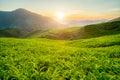 Tea plantation in Cameron highlands, Malaysia Royalty Free Stock Photo
