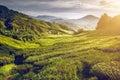 Tea plantation in Malaysia Royalty Free Stock Photo