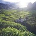 Tea Plantation Tea Crop Green Outdoors Concept Royalty Free Stock Photo