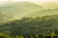 Tea Plantations at Chiang Rai Thailand Royalty Free Stock Photo