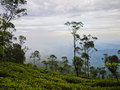 Tea plantations close to haputale sri lanka on the mountains Stock Images