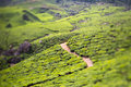 Tea plantations india province kerala Royalty Free Stock Photography