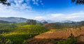 Tea plantations in india province kerala Stock Images