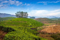 Tea plantations in india province kerala Stock Photo