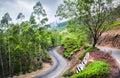 Tea plantations in Munnar Royalty Free Stock Photo
