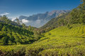 Tea plantations in Munnar, Kerala, India Stock Photos