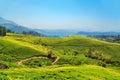Tea plantations in Munnar, Kerala, India. Royalty Free Stock Photo