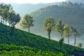 Tea plantations in Munnar, Kerala, South India Royalty Free Stock Photo