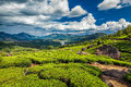 Tea plantations and river in hills,  Kerala, India Royalty Free Stock Photo