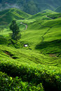Tea Valley, Cameron Highlands Stock Image