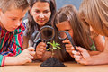 Teacher and pupils in biology class students looking at a plant through magnifier Stock Photography