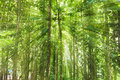Teak forests to the environment with sun light green Stock Photos