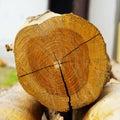 Teak log timber
