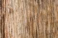 Teak tree bark texture Royalty Free Stock Photo