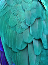 Teal/Turquoise Macaw Feathers