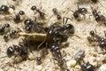 Tím z mravce
