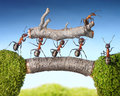 Team of ants carry log on bridge, teamwork Royalty Free Stock Photo