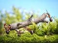 Team of ants carry log, teamwork Royalty Free Stock Photo
