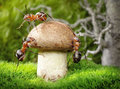 Team of ants mushrooming, teamwork Stock Photos