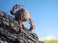 Team of ants rolls stone uphill, teamwork Royalty Free Stock Photo