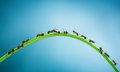 Team of ants running around the curved green blade grass on a blue background Royalty Free Stock Photo
