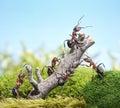 Tím z mravce a zvetraný strom tímová práca