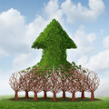Team growth and corporate profit business concept with a group of growing trees joining together to form an upward arrow as Stock Photos