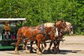 Team of horses mackinac island mi june a three pulls a carriage that is about to be boarded by tourists in mackinac island state Royalty Free Stock Photo