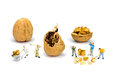 Team of miniature human figurines transporting walnuts content walnut isolated on white background Royalty Free Stock Image