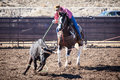 Team Roping Competition Royalty Free Stock Photo