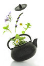 Teapot with fresh herbs bouquet of various isolated on white Royalty Free Stock Photos