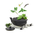 Teapot with fresh herbs various isolated on white Stock Photos