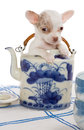 Teapot puppy baby chihuahua sitting in an antique Royalty Free Stock Photo