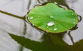 The teardrop on leave lotus in river background Stock Photo