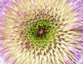 Teasel Stock Photography