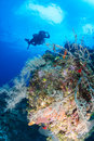 Technical Divers on a deep tropical coral reef Royalty Free Stock Photo