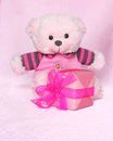 Teddy bear with gift valentines day stock photos or mothers card cute teddybear box on pink background Stock Images