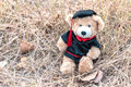 Teddy bear with graduation gown Royalty Free Stock Photo