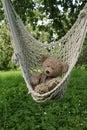 Teddy bear in hammoch Royalty Free Stock Photo
