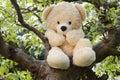 Teddy bear hiding in apple tree Royalty Free Stock Photo
