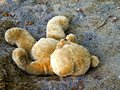 Teddy bear laying down in sandbox at childrens playground Royalty Free Stock Photo