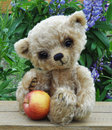 Teddy-bear Lucky with an apple a Stock Image