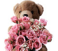 Teddy bear with pink roses Stock Images