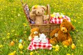 Teddy Bear`s Picnic in summer with bright yellow dandelions