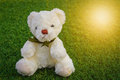 Teddy Bear toy sitting on green grass in nature Royalty Free Stock Photo