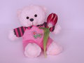 Teddy bear with tulip valentines day stock photos or mothers card cute pink teddybear flower on purple background Stock Images