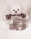 Teddy bear with tulip valentines day stock photos or mothers card cute pink teddybear gift box Stock Image